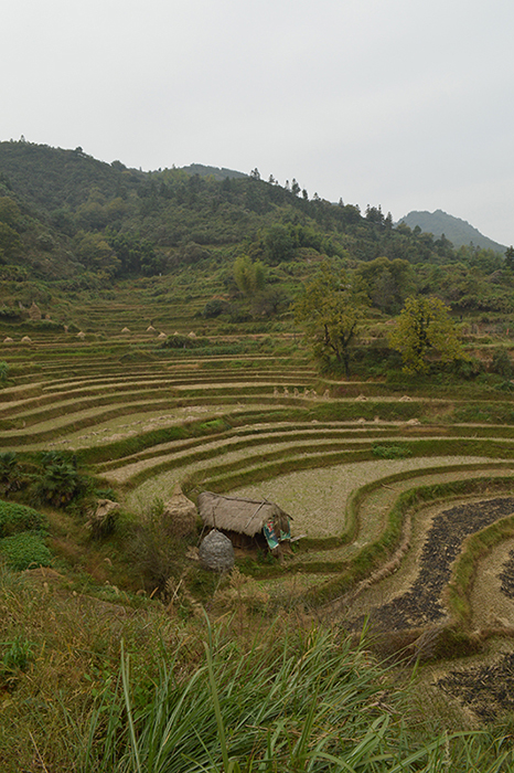 Terraces fields near Huangling